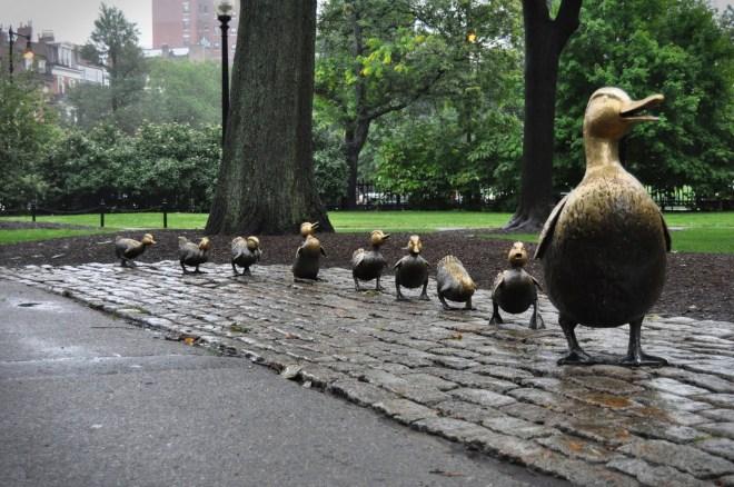 boston-ducks
